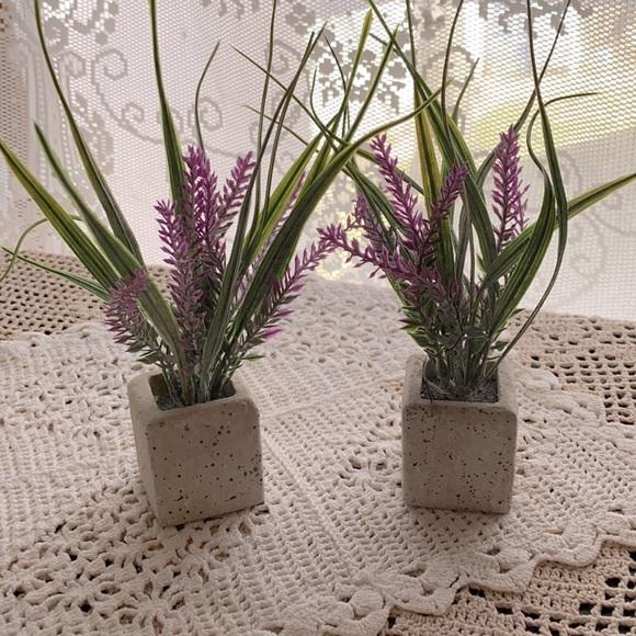 2 Lavender Plants!